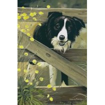 Farmgate - border collie